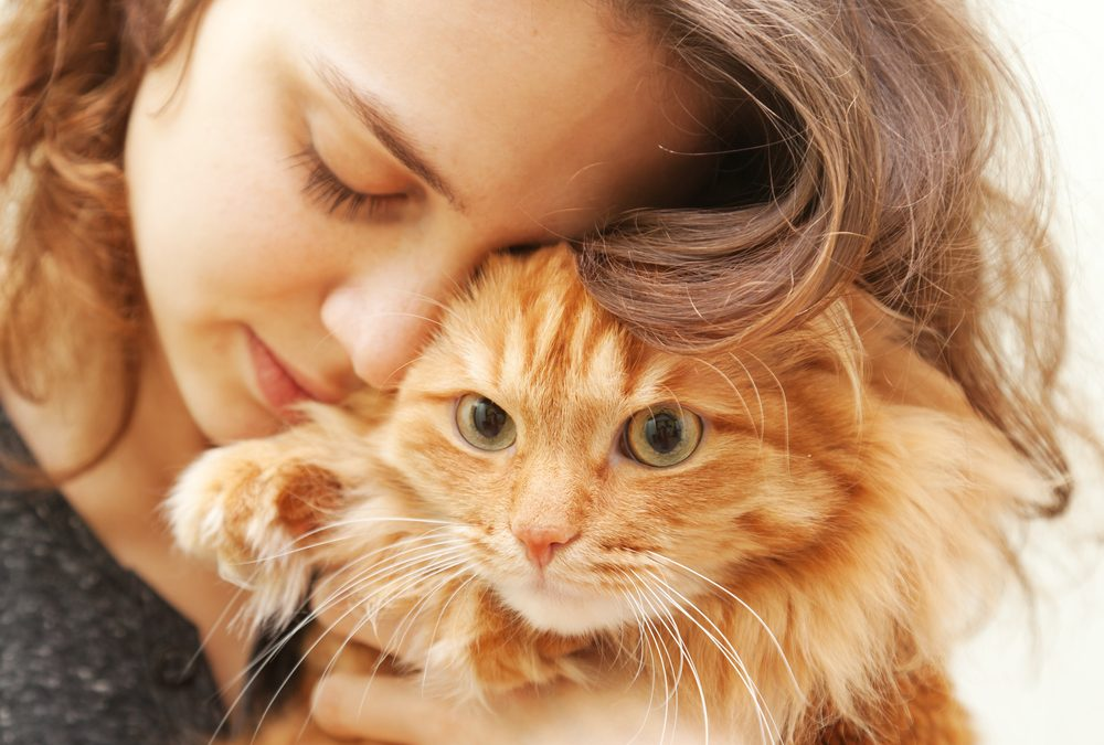 Enrichment: Add this 'ingredient' for the best cat care