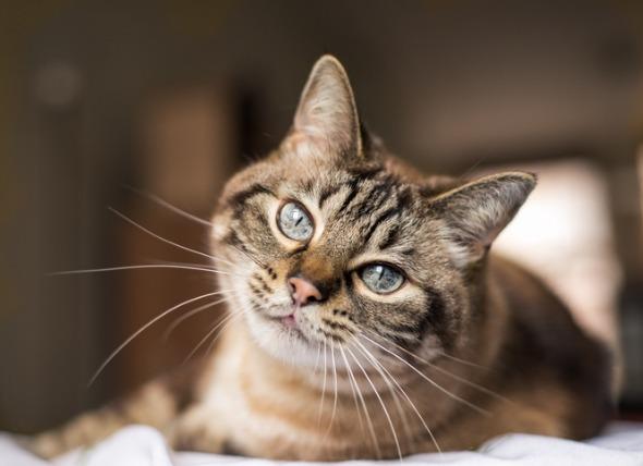 Secrets to Keeping Your Indoor Cat Happy