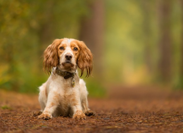 11 FAQ About Tick Bites on Dogs